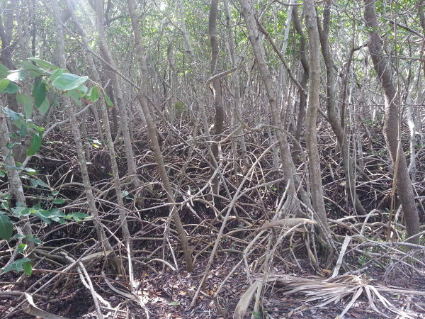 Weedon Island Preserve - 2013-01-13T11:40:54_v1