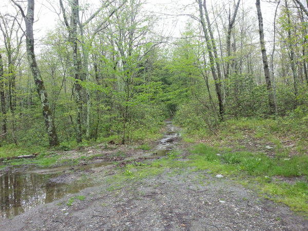 the lower 1/5 of the trail was a stream, ankle deep in parts