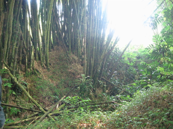 the grove at Plenitud